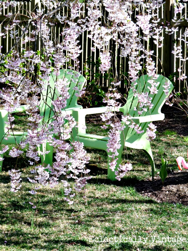 Weeping Cherry Tree - gorgeous in the spring (and more creative gardening ideas kellyelko.com