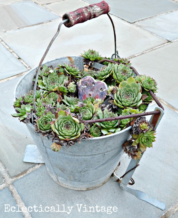 Succulents in an old mop bucket - and lots of other creative gardening ideas here kellyelko.com