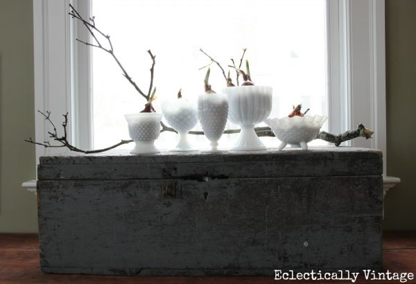 Vintage milk glass is perfect for forcing bulbs kellyelko.com
