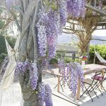 Wisteria Covered Pergola - what a view!