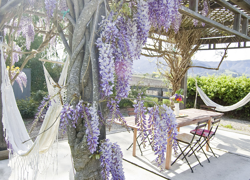 Wisteria covered pergola with a view - tour this fun California cottage kellyelko.com