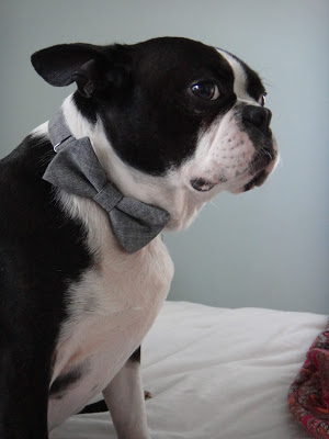 Cutest Bow-Tie Wearing Boston Terrior (and a stylish house tour)!