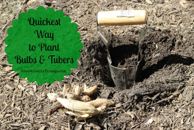 Quickest Way to Plant Bulbs & Tubers - forget the shovel!  kellyelko.com