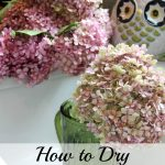 How-to-Dry-Hydrangeas