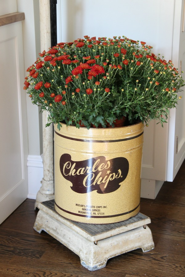 Vintage Charles Chips tin - perfect little planter.  kellyelko.com