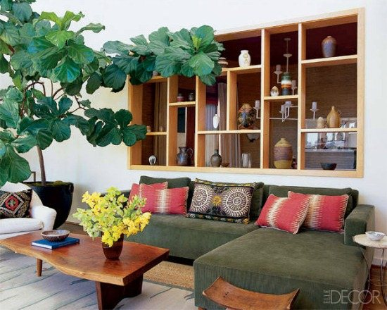 Decorating with Fiddle Leaf Fig Tree - these are gorgeous!  eclecticallyvintage.com