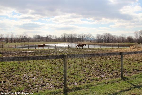 Horse farm eclecticallyvintage.com