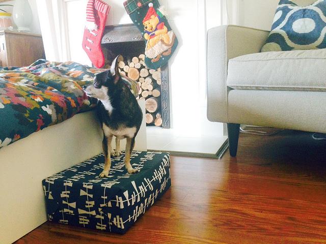 Make a doggie step kellyelko.com