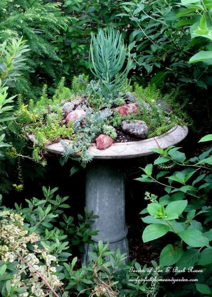 Birdbath planter filled with succulents - love this garden! kellyelko.com