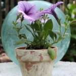 How to Age Terra Cotta Pots eclecticallyvintage.com