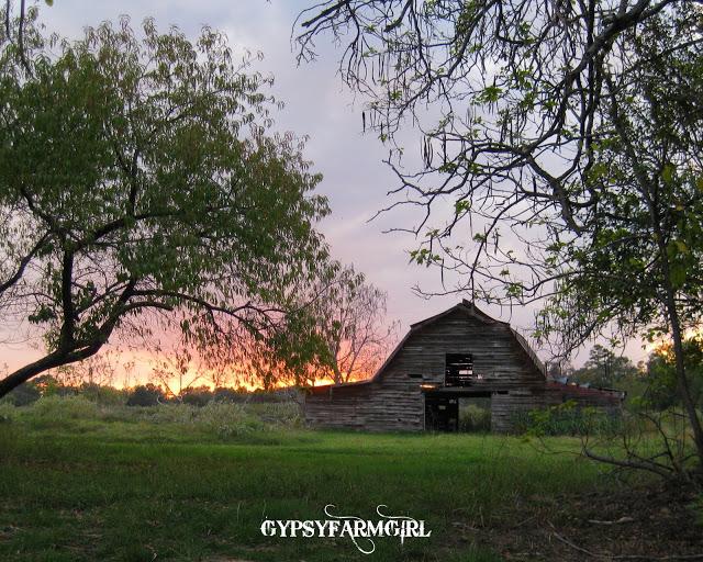 Gorgeous barn and garden tour of Gypsy Farm Girl kellyelko.com