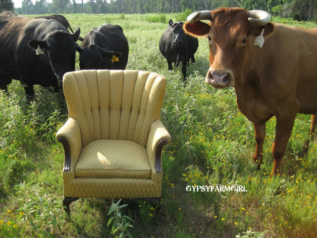 Vintage chair even the cows love! kellyelko.com