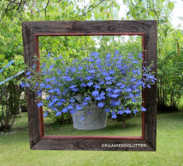 Garden tour of Organized Clutter - love the framed lobelia! kellyelko.com