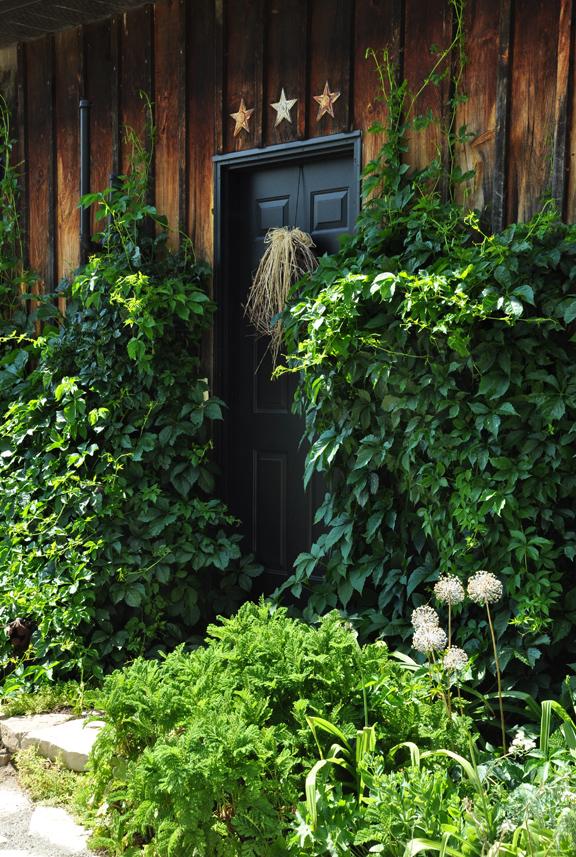 Climbing vines and charming garden tour kellyelko.com