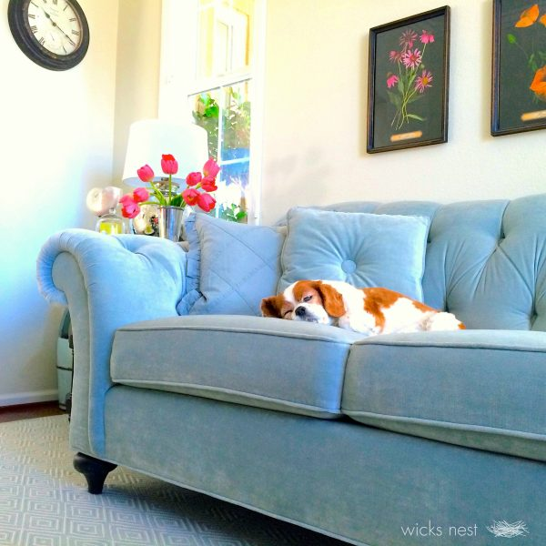 Love this cozy blue tufted sofa kellyelko.com