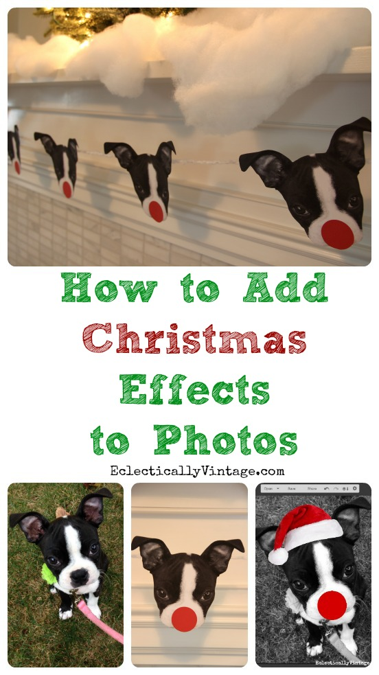 How to Add Effects to Photos - Fun Pet Photo Christmas Ideas! kellyelko.com