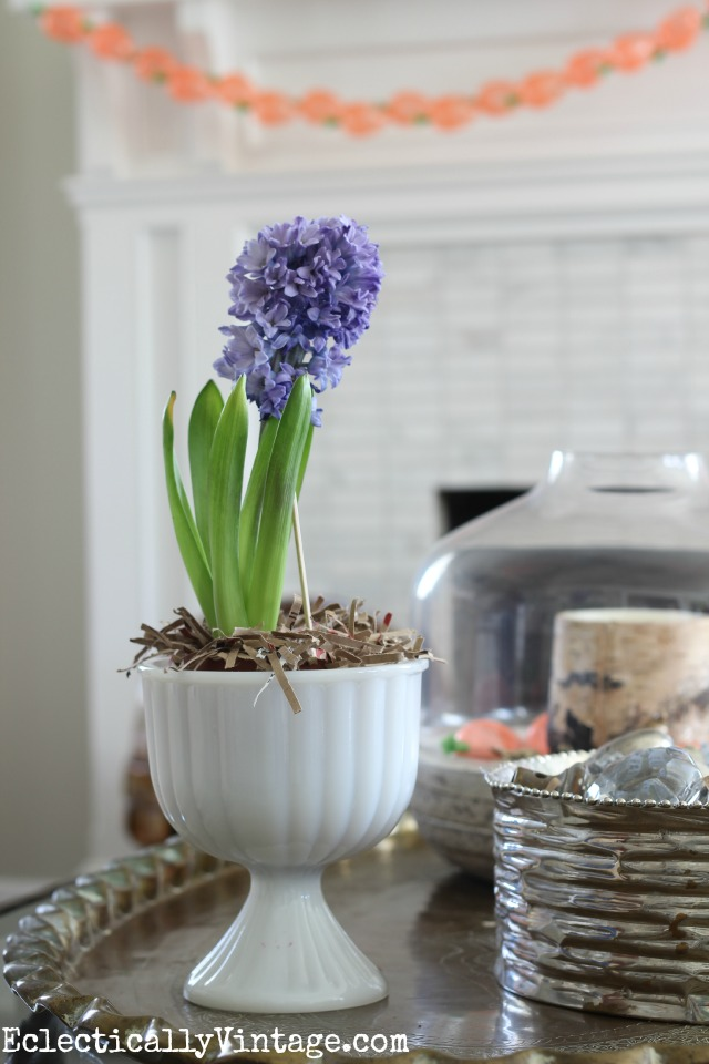 Hyacinths smell like spring!  Love it in the vintage milk glass kellyelko.com