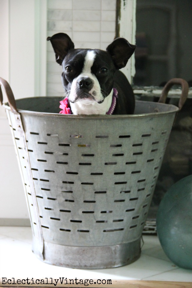 Love this huge old olive bucket - big enough to fit a dog! kellyelko.com