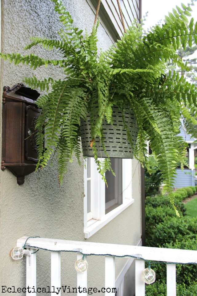 Love this olive bucket hanging planter and the huge fern kellyelko.com