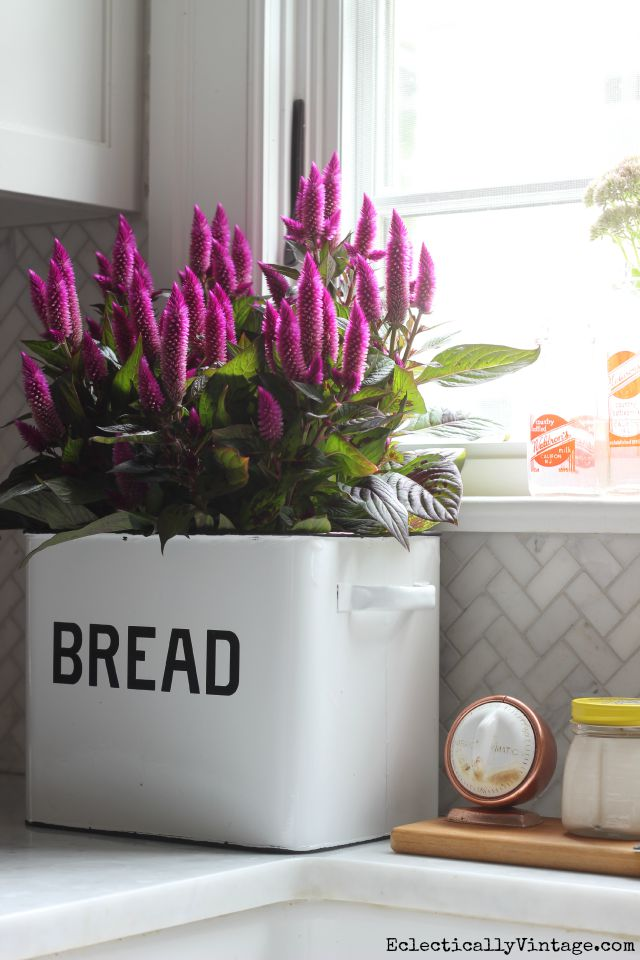 Bread box planter kellyelko.com