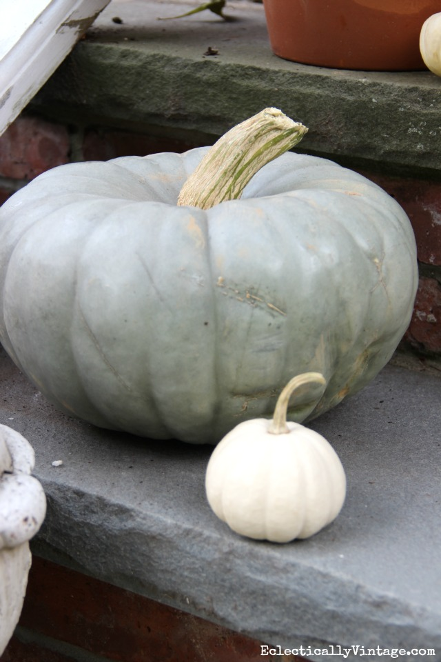 Love these fun blue cinderella pumpkins for fall kellyelko.com