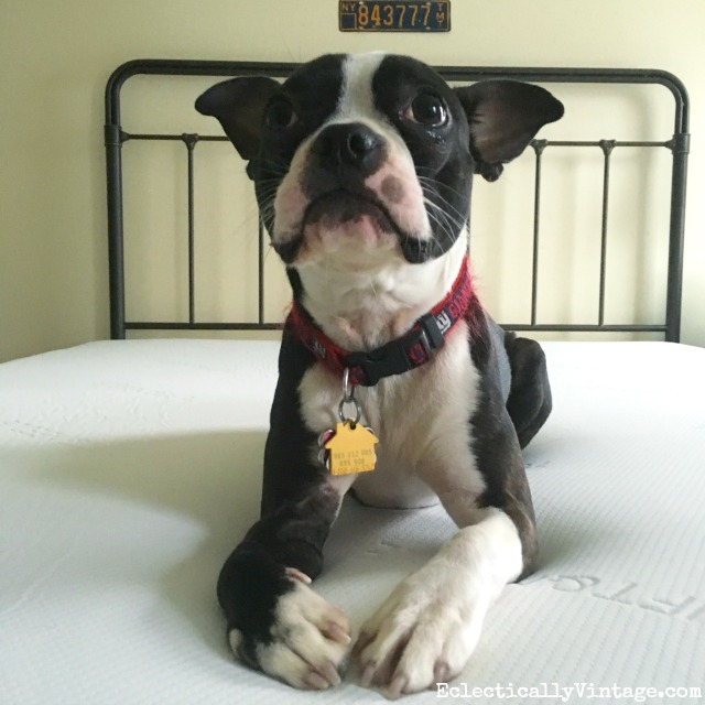 Affordable mattress review - even the dog loves it! kellyelko.com