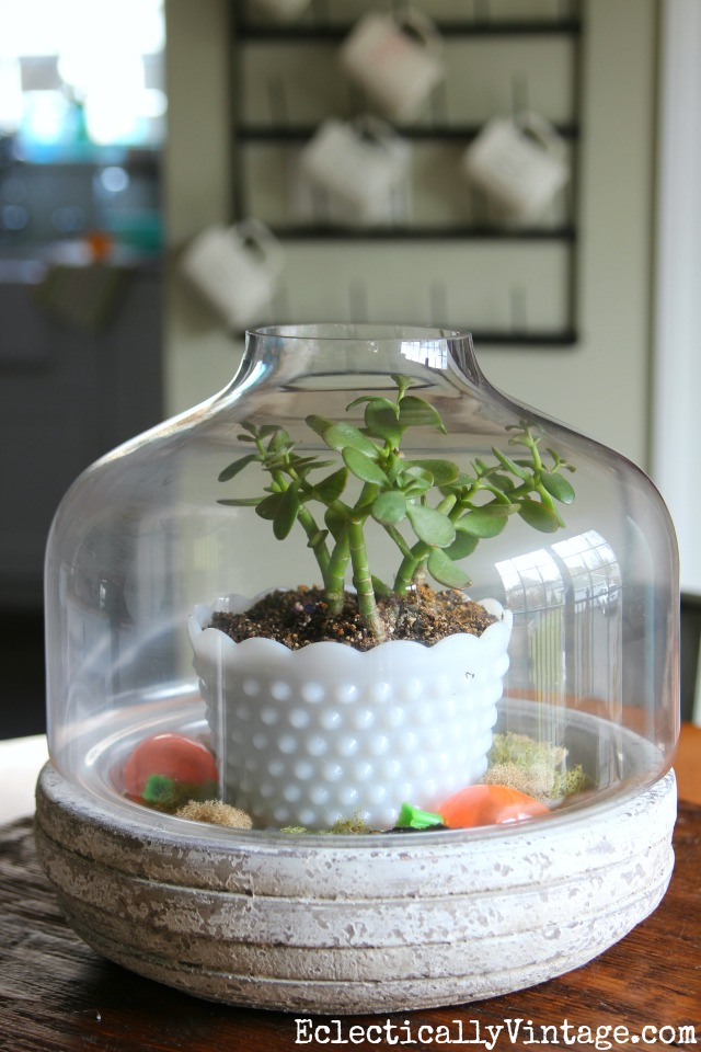 Simple terrarium - a potted plant surrounded by moss kellyelko.com