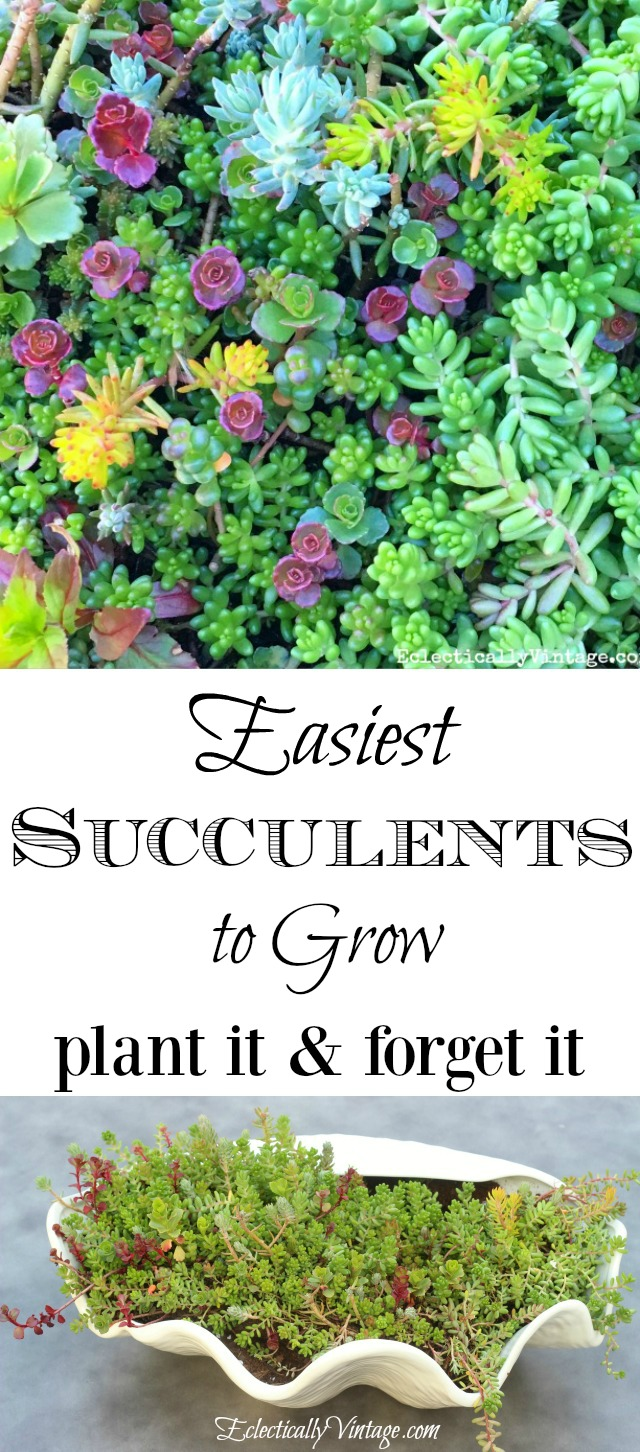 Easiest Succulents to Grow - great tips on how to plant it and forget it! kellyelko.com