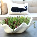 Easiest Succulents to Grow - love this clam shell planter filled with sedum eclecticallyvintage.com