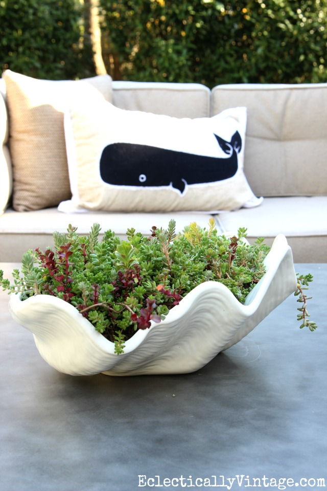 Easiest Succulents to Grow - love this clam shell planter filled with sedum kellyelko.com