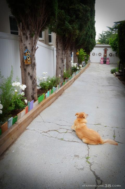 Colorful garden border kellyelko.com