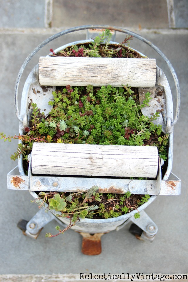 Love this mop bucket planter filled with succulents - love her tips on a quick and easy way to grow them kellyelko.com