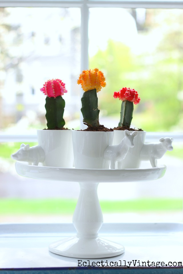 Colorful cacti centerpiece - love the little animal planters and she has great tips on growing these cute little cactus plants kellyelko.com