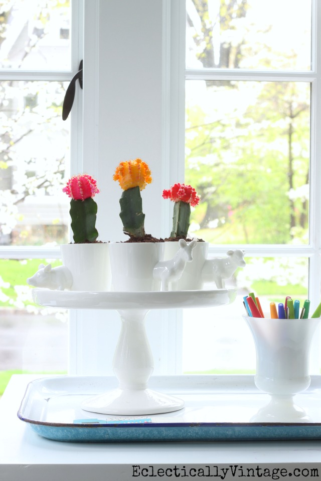 Colorful cactus planters kellyelko.com