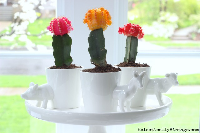 Colorful cactus planters - how cute are the little animal planters! kellyelko.com