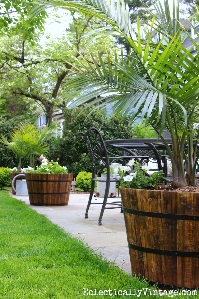 Love these giant whiskey barrel planters filled with palm trees - three lined up on a patio really define the space kellyelko.com
