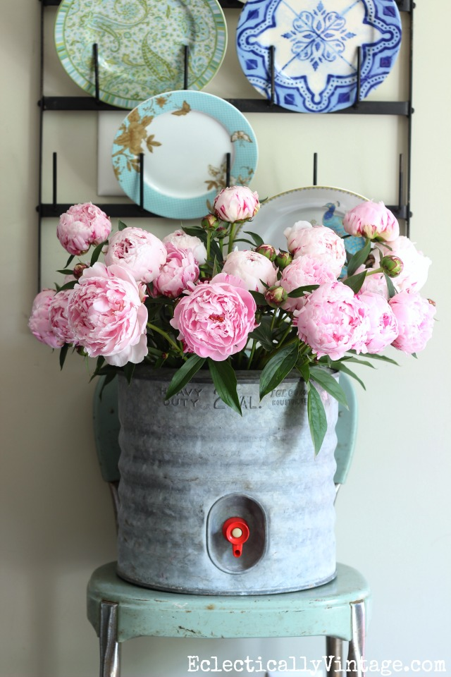 Love these gorgeous pink peonies in a vintage galvanized water cooler kellyelko.com