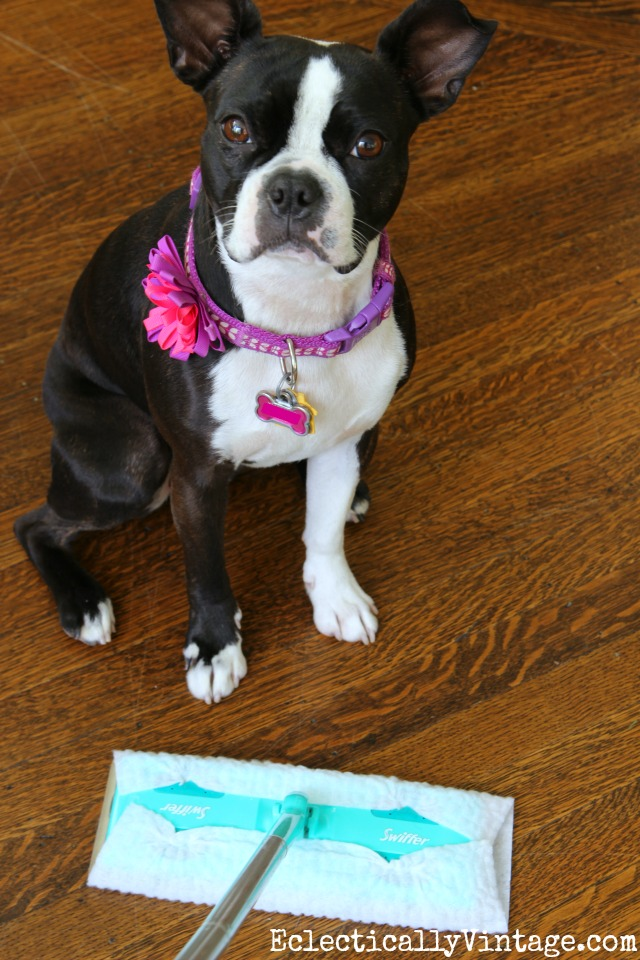 Swiffer Cleaning Tips - love them for picking up pet hair! kellyelko.com