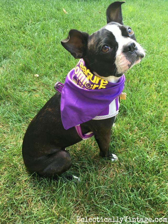 Boston Therapy Dog Training