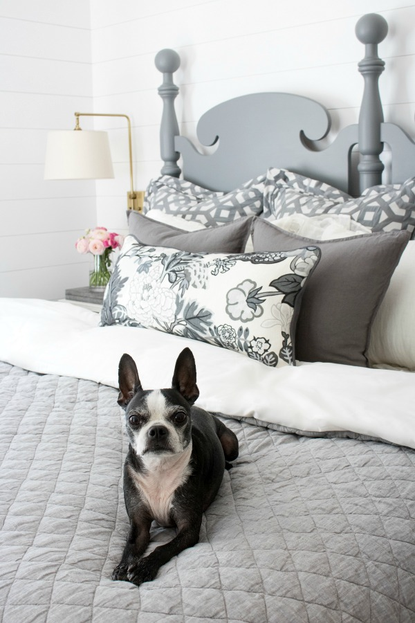 Gray bedding and a Boston Terrier! kellyelko.com