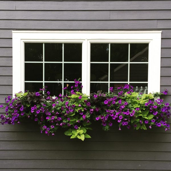 Beautiful window box filled with purple petunias kellyelko.com