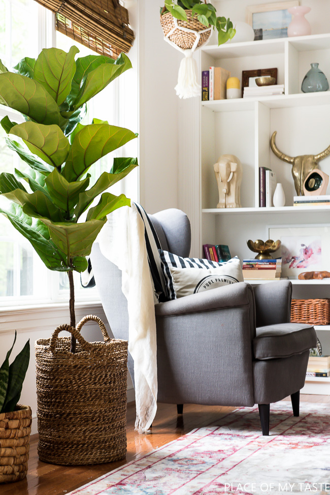 Fiddle leaf fig in a basket planter kellyelko.com